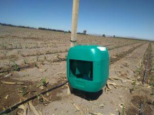 Trampa de agua para feromonas en el cultivo de maíz. feromonas sexuales sintéticas